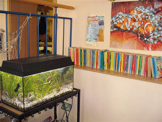 Bild des Aquariums